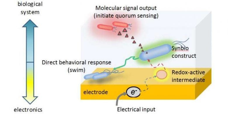 محققان یک دستگاه الکتروژنتیک ساده ارائه دادهاند که از بیومولکولهای ردوکس (اکسایش-احیا) برای انتقال اطلاعات الکترونیکی به سلولهای باکتریایی مهندسی شده استفاده می کند.