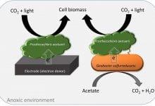 فتوسنتز بیهوازی بوسیله انتقال مستقیم الکترون بین گونههای باکتریایی