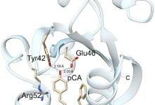 Photo of پروتئین های حساس به نور، یاری بخش مطالعات زیستپزشکی