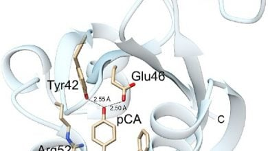 پروتئین های حساس به نور، یاری بخش مطالعات زیستپزشکی