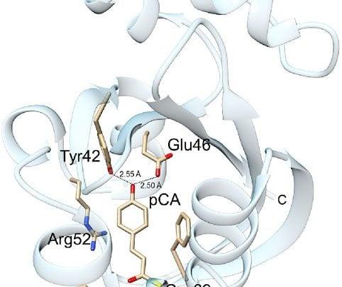 یکی از روشهای نویدبخش در مطالعات کشف دارو و به طور کلی زیستپزشکی، بررسی ساختار پروتئینهای حساس به نور است.