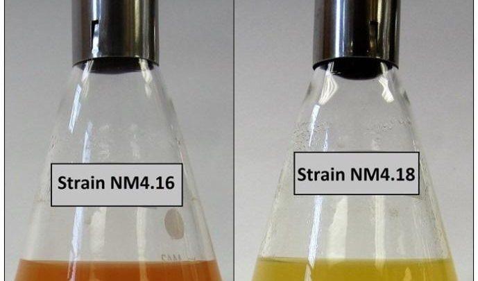 کشف باکتریهای جدید با قابلیت سمزدایی از اکسیدهای فلزی