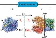 Photo of سلول سوختی آنزیمی، تولید همزمان آمونیاک و الکتریسیته