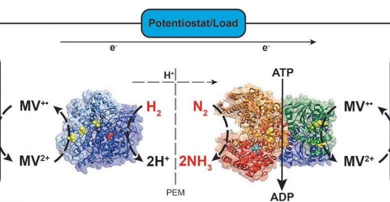 سلول سوختی آنزیمی، تولید همزمان آمونیاک و الکتریسیته