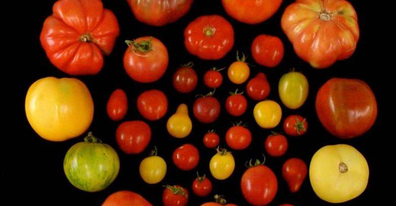 گوجه ها را دوباره مزه دار کنیم