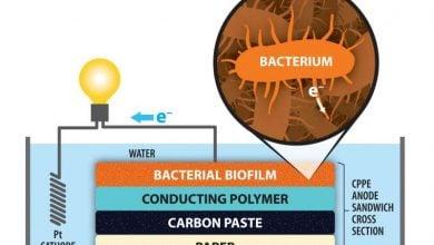 Photo of ساخت سلول سوختی میکروبی بهتر با کاغذ