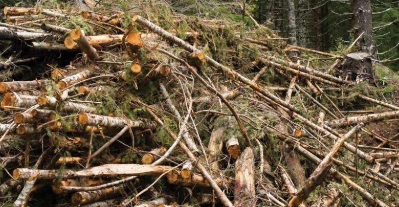 تمایل و پتانسیل زیادی برای استفاده از زیست توده های جنگل برای اهداف گوناگون وجود دارد که یکی از آنها حمایت از جوامع روستایی است. محققان در دانشکده جنگلداری دانشگاه ایالتی اورگان با بررسی دادههای حاصل از برآورد هزینه های جمع آوری، حمل و نقل و پردازش زیست توده در مکان های بالقوهی محلی در غرب اورگان به نتایجی دست یافتند.