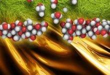 اثر گروهی میکروارگانیسم ها، عامل بهبود عملکرد آنزیم تجزیه سلولز