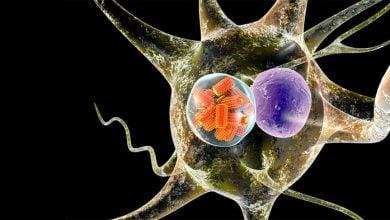 Photo of جلوگیری از سرطان مغز با ویروس هاری!