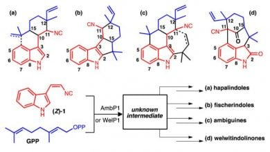 Photo of داروهایی با منشأ طبیعی: تأثیر زیاد ترکیبات چندگانه در مقادیر کم