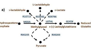 Photo of یافتن واکنشهای مفقود در یک شبکه متابولیک با استفاده از داده های هم بیانی ژنها