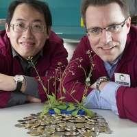 Photo of توسعه گیاهان برای مصارف بهتر