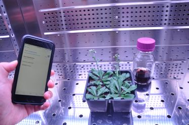 نانوبیونیک گیاهی: تبدیل گیاه زنده به حسگر - اخبار زیست فناوری