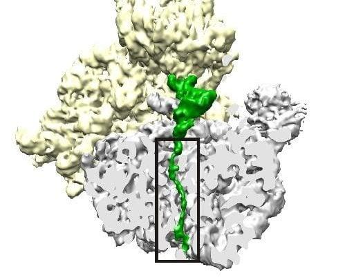 استراتژی جدیدِ دارویی: هدف گیری ریبوزوم به منظور توقف تولید پروتئین خاص