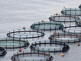 راه حل جدید برای تصفیه پساب حاصل از آبزیپروری - اخبار زیست فناوری