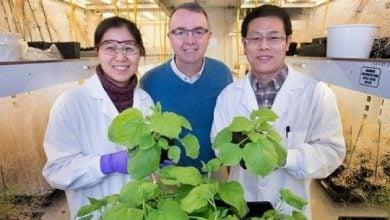 Photo of کشف رابط بین میزان تولید کربوهیدرات و روغن در گیاهان