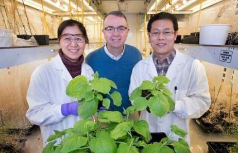کشف رابط بین میزان تولید کربوهیدرات و روغن در گیاهان - اخبار زیست فناوری