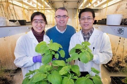 کشف رابط بین میزان تولید کربوهیدرات و روغن در گیاهان