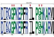 بررسی فعالیت مهار کنندگی بر روی HIV-1 نوع C - اخبار زیست فناوری