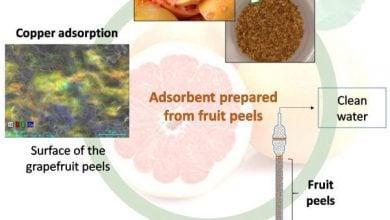 ساخت جاذب زیستی از پوست مرکبات - اخبار زیست فناوری
