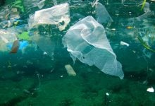 Photo of زیستپالایی برای مبارزه با آلودگیهای پلاستیکی