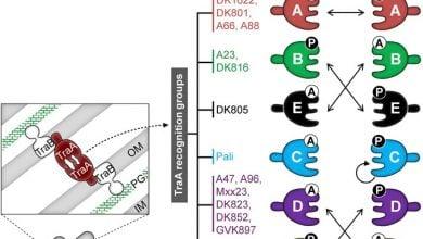 Photo of کشف پروتئین کلیدی در باکتریها برای شناسایی یکدیگر
