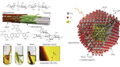Photo of تولید هیدروژن پاک از زیستتوده با کمک نور خورشید