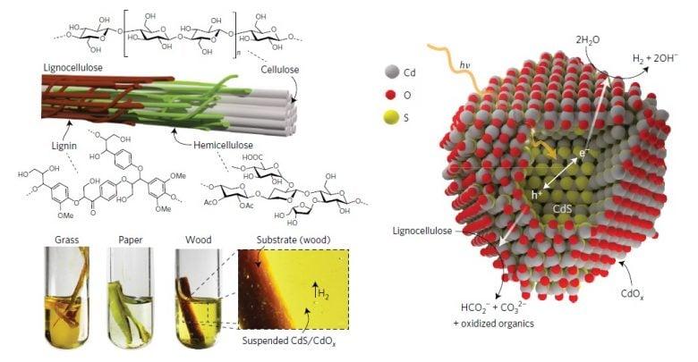 تولید هیدروژن پاک از زیستتوده با کمک نور خورشید