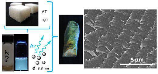 سنسور جدید ساخته شده از سلولز - زیست فناوری
