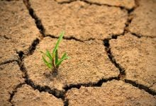 گیرنده های آبسیزیک اسید و مقاومت به خشکی - زیست فناوری