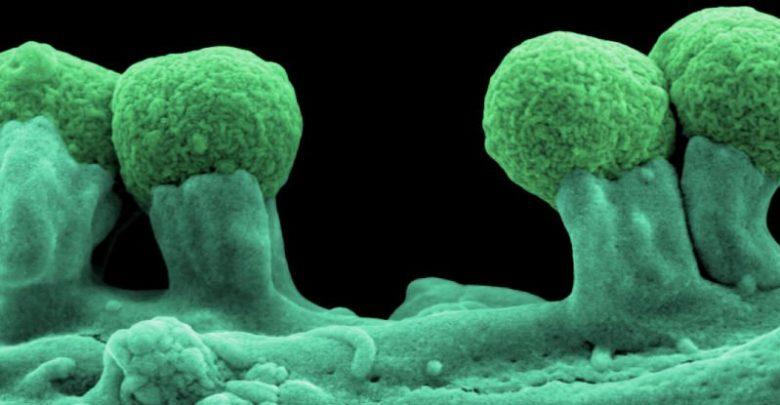 دانشمندان برای اولین بار یک موجود نیمه مصنوعی را مهندسی کردهاند، یک باکتری E.coli با شش حرف ژنتیکی. همهی موجودات زنده روی کره زمین DNA 4 حرفی (متشکل از G،T،C و A) دارند، این E.coliهای دستکاری شده دو باز اضافی در DNA خود دارند.