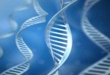 تغییرات اپیژنتیک مرتبط با احتمال مرگ - اخبار زیست فناوری