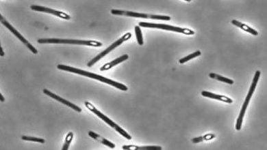 Photo of یک کربوهیدرات طبیعی علیه مسمومیت غذایی