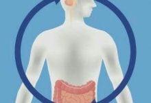 Photo of پریبیوتیک ها و تأثیرگذاری بر اثرات مضر اضطراب
