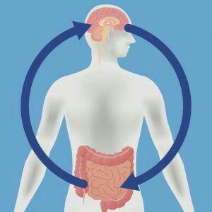 پریبیوتیک ها و تأثیرگذاری بر اثرات مضر اضطراب