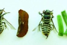 Photo of پلاستیک؛ ماده ی جدید لانه سازی زنبورها!