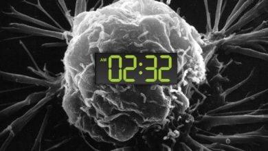 چرا نوبت شبکاری خطر ابتلا به سرطان را افزایش می دهد؟ زیست فناوری