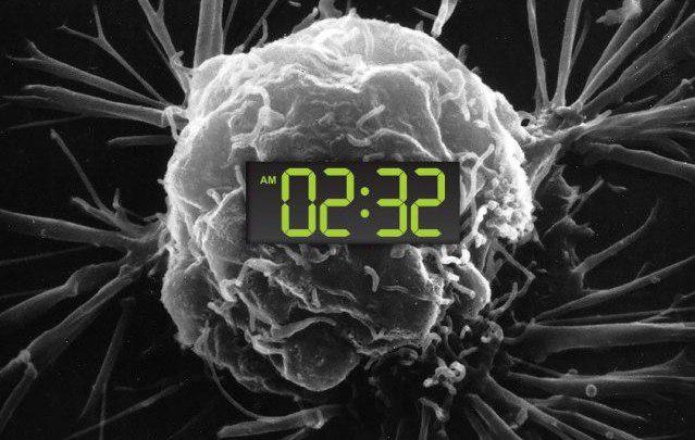 مطالعات گسترده در مورد عوامل افزایشدهنده خطر سرطان نشان دادند که کار کردن در نوبت شب، توسعه و پیشرفت سرطان را بالا می برد. در انسان ها و بیشتر موجودات ساعات شبانهروز به واسطه روشنایی مدیریت شده که خود تنظیمکننده زمان فرآیندهای کلیدی فیزیولوژی انسان، مانند متابولیسم و تقسیم سلولی است. در مطالعاتی که روی موش ها انجام شده است محققان متوجه شدند که دو گروه از ژن های کنترلکننده ساعات شبانهروزی سلول، دارای عملکرد سرکوبکننده تومور نیز هستند. از دست دادن این سرکوب گران تومور چه بهواسطه حذف ژنی و چه بهواسطه اختلال در سیکل تاریکی- روشنایی، به تومورها اجازه می دهد تا تهاجمیتر عمل کنند.