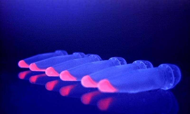 همکاری ویروس ها و باکتریها برای فتوسنتز - اخبار زیست فناوری