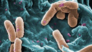 Photo of با دوازده باکتری که نیاز فوری به دارو علیه آنها وجود دارد آشنا شوید