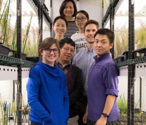یکی از دانشمندان دانشگاه Iowa در پژوهشی جدید، فرایندی ژنتیکی را معرفی نمود که رشد و توانایی تحمل خشکی در گیاهان را تحت کنترل قرار می دهد؛ پیشرفتی که میتواند ویژگی های عملکردی بهتری را در محصولات گیاهی سبب شود.