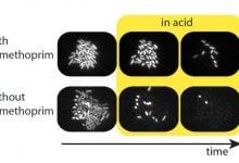 Photo of استرس و محافظت از باکتریها
