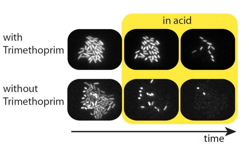استرس و محافظت از باکتریها - اخبار زیست فن