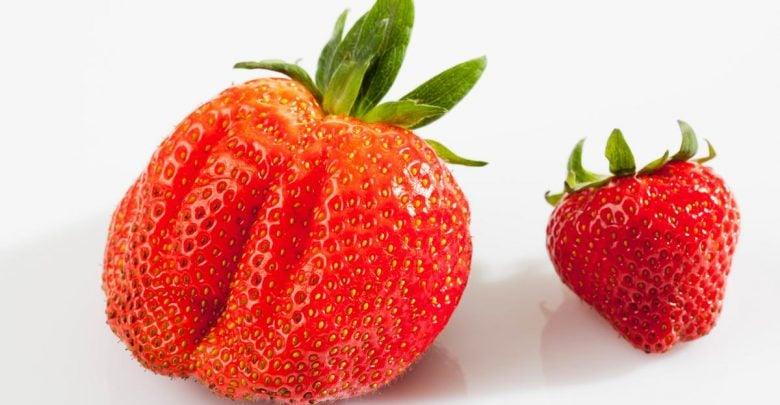گیاهان پلی پلوئید همواره دارای مکانیسمی هستند که نسبت به خویشاوندان دیپلوئید خود، بهتر با محیط زیست تطبیق می شوند.