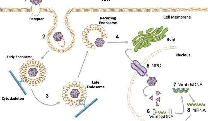 درمان های مبتنی بر آنتی بادی های مونوکلونال، به دلیل اختصاصیت بالا و سمیت بسیار کم، انقلابی در درمان سرطان و بیماری های خود ایمنی ایجاد کردند.