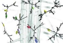 تارهای کشنده، هدفی برای تولید گیاهان مقاومتر - اخبار زیست فناوری