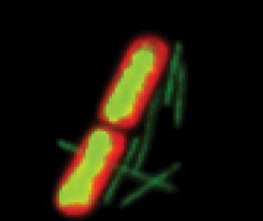 یک جمعیت میکروبی شامل گروههای مختلفی از میکروارگانیسمهاست که با یک دیگر در ارتباط اند. این جمعیتها بازیگر اصلی تغییرات جو و خاک هستند و چرخههای بیوژئوشیمیایی، حاصل تلاش این جمعیتهای میکروبی است. برای پی بردن به اهمیت میکروارگانیسمها در طبیعت، کافی است جهان را بدون سیانوباکتریها، و نقش تاریخی آنها در تولید اکسیژنِ جو تصور کنید.