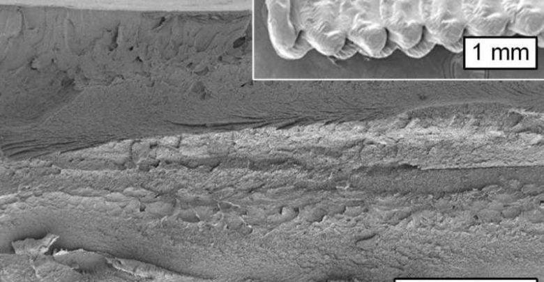 برای قرنها، سلولز موجود در کاغذ فراوانترین ماده مورد استفاده در صنعت چاپ بوده است. اکنون به لطف تحقیقات دانشمندان دانشگاه MIT سلولز تبدیل به فراوانترین ماده با خاصیت تجزیهپذیری و تجدیدپذیری نسبت به سایر پلیمرهای مورد استفاده در چاپ سه بعدی نیز شده است.