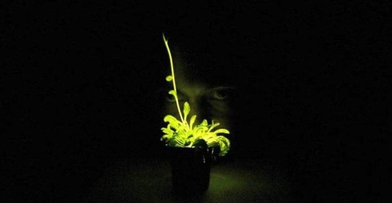 چهار سال پیش یک پروژه در حوزهی زیست شناسی مصنوعی موفق به دریافت حدود پانصد هزار دلار از Kickstarter شد. این پروژه برای ساخت گیاهانی بود که بتوانند در تاریکی بدرخشند و این دید را به حامیان مالی خود داد که در آینده میتوان از این گیاهان به جای لامپ برای روشن کردن خیابانها استفاده کرد.