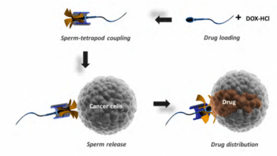Photo of حمل دارو توسط اسپرمها راهی برای درمان بیماریها در زنان